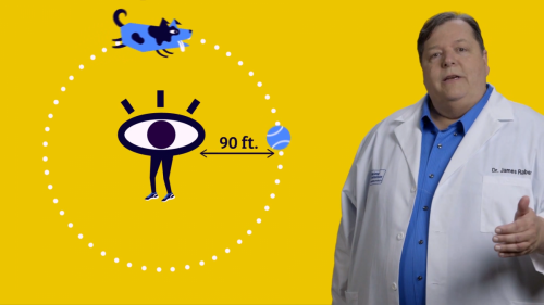 Ask a Scientist: All Eyes on Animals Educational Video
